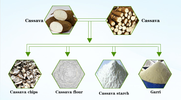 cassava starch as an effective component A valuable source of starch, cassava is familiar in many developed countries in a granular form known as tapioca easily cultivated and curiously immune to most food-crop pests, cassava is a staple crop in several areas of latin america.
