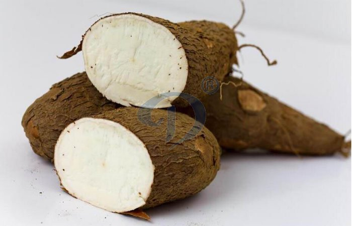 Why is cassava an important food crop for Africa?