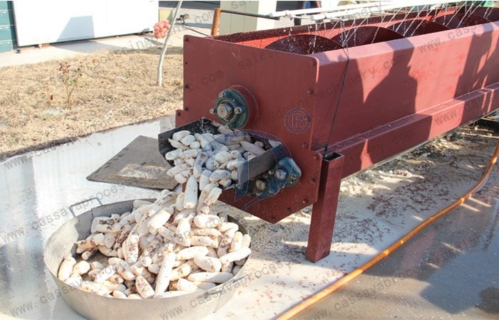 Peeler machine used in cassava flour processing