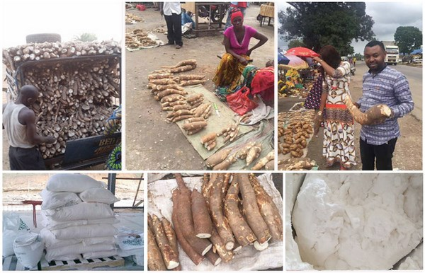 cassava flour production process