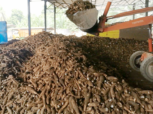cassava production factory
