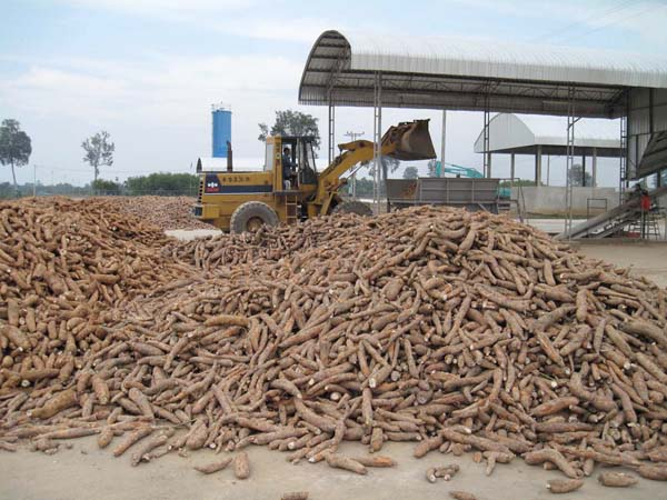Cassava production in Cambodia processing status