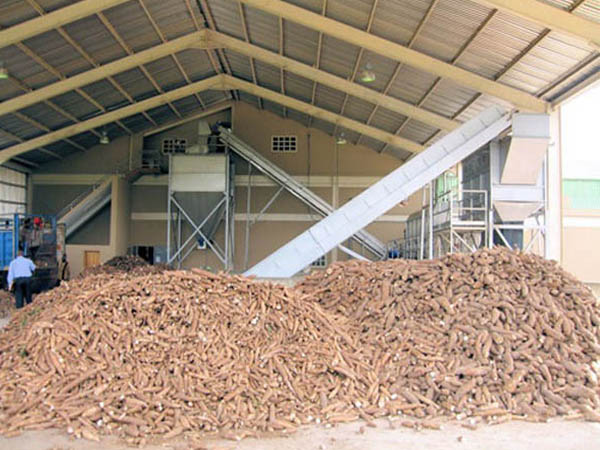 Cassava production processing and marketing