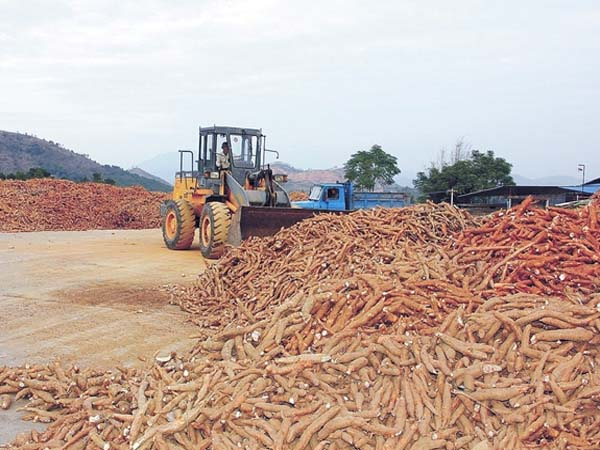 Where is cassava processing machine sold and how much is the cost ?