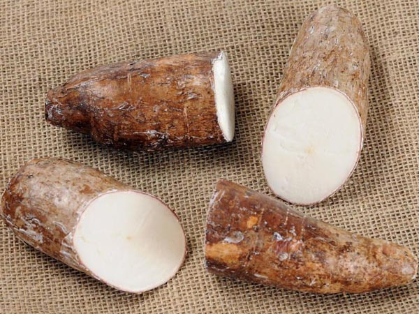 Two types of cassava