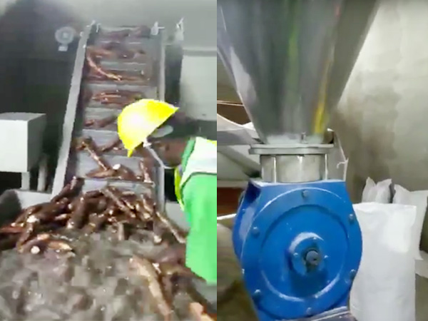 Nigeria cassava starch processing plant project processing
