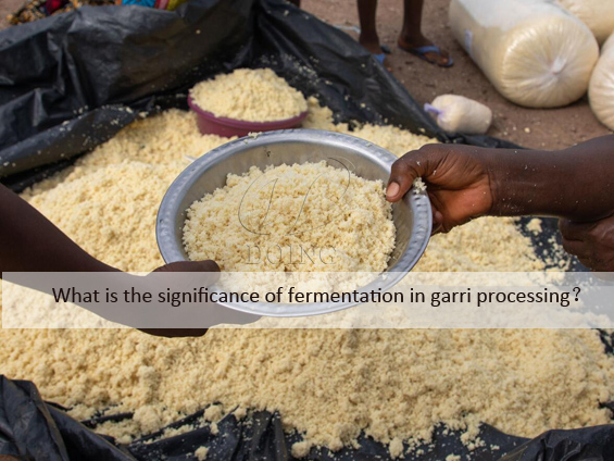 What is the significance of fermentation in garri processing?